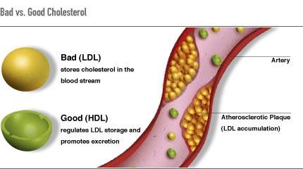 introducing cholesterol – intrinsic health