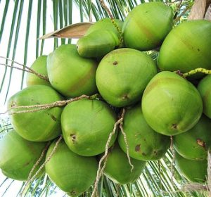 Why I Love Coconuts (and You Should, Too!): Part 2